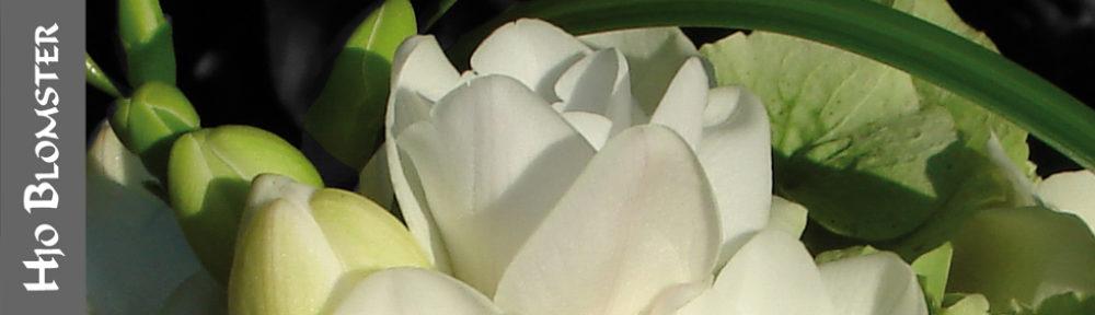 Hjo Blomster